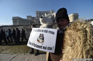 solutii-proteste-ciobani-caini-stana-349386